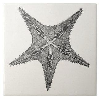 Vintage Starfish Antique Star Fish Template Large Square Tile