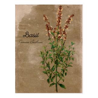 Vintage Style Basil Herb Postcard