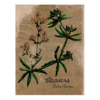 Vintage Style Cleavers Herb Postcard