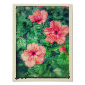 Vintage Style Tropical Hibiscus Flowers Poster