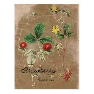 Vintage Style Wild Strawberry Postcard