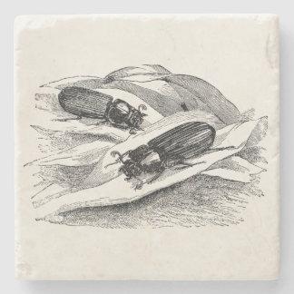 Vintage Sugar Beetle Passalus - Bug Template Blank Stone Coaster