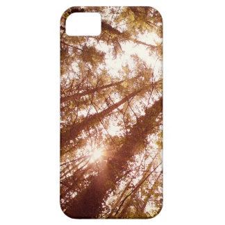 Vintage Summer Trees Case For The iPhone 5