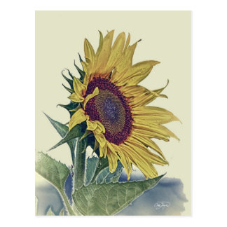 Vintage Sunflower Original Shabby Old School Look Postcard