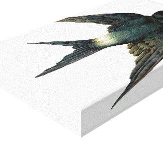 Vintage Swallow Bird Illustration Canvas Prints
