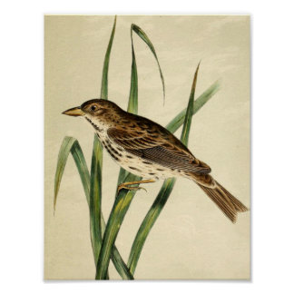 Vintage Swamp Swallow Poster