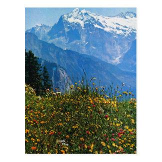 Vintage Switzerland, Schynigge Platte, 1909 6 Postcard