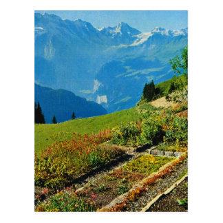 Vintage Switzerland, Schynigge Platte, 1909 9 Postcard