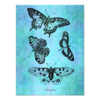 Vintage Teal Blue Butterfly Drawing - Butterflies Photo Print