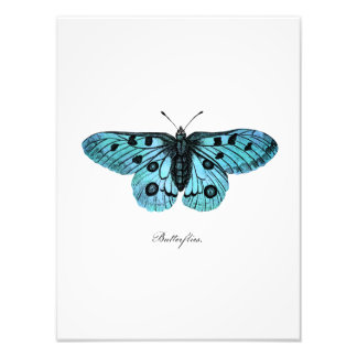 Vintage Teal Blue Butterfly Illustration -1800's Photo