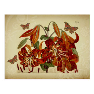 Vintage Tiger Lilies and Butterflies Postcard