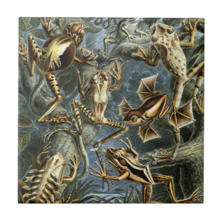 Vintage Toads and Frogs Batrachia by Ernst Haeckel Small Square Tile