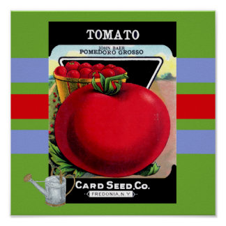 Vintage Tomato Seed Poster