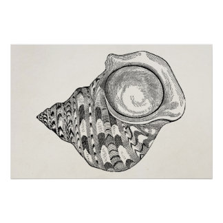 Vintage Top Seashell Antique Shells Template Poster