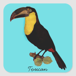 VINTAGE TOUCAN BIRD. YELLOW-THROATED TOUCAN STICKE SQUARE STICKER