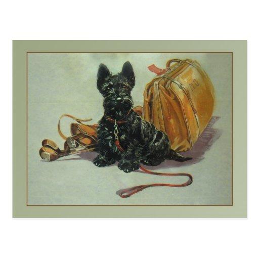 Vintage Traveling Scottie Dog Postcard