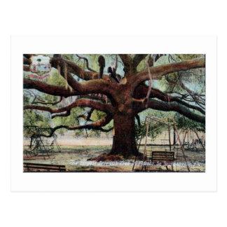 Vintage Treaty Oak Jacksonville Florida Postcard