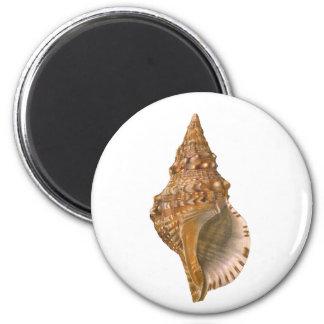 Vintage Triton Seashell Shell, Marine Ocean Animal Magnet