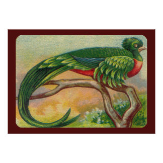Vintage Tropical Bird Print