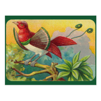 Vintage Tropical Bird Print Postcard