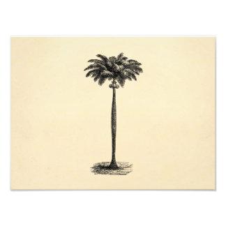 Vintage Tropical Island Palm TreeTemplate Blank Photo