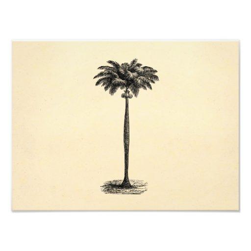 Vintage Tropical Island Palm TreeTemplate Blank Photo Art