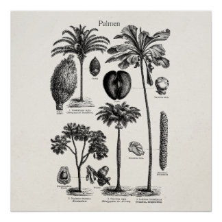 Vintage Tropical Island Palm Tree Template Blank Poster