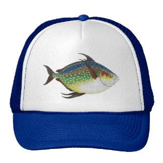 Vintage Tropical Opah Fish, Marine Aquatic Animal Cap