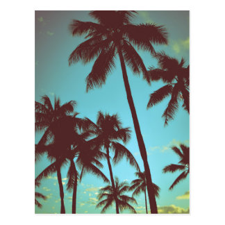 Vintage Tropical Palms Postcard