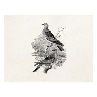 Vintage Turtle Doves Bird Personalised Dove Birds Postcard