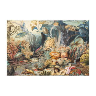 Vintage Under the Sea   Canvas Print