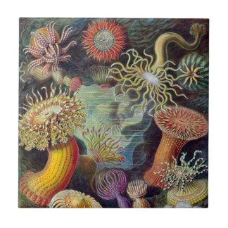 Vintage Underwater Sea Anemones by Ernst Haeckel Small Square Tile