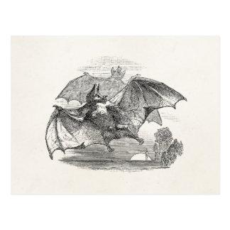 Vintage Vampire Bats Personalized Retro Bats Postcard