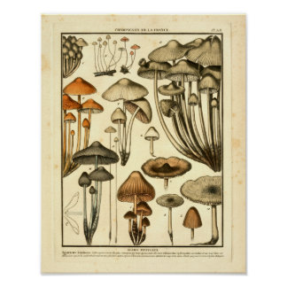 Vintage Varieties of Brown Mushrooms French Print