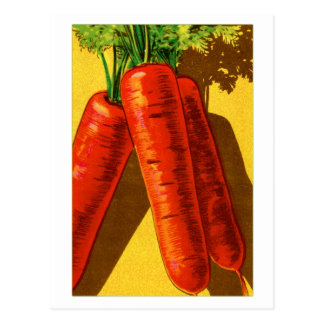Vintage Vegetables Heirloom Orange Carrots French Postcard