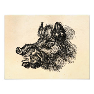 Vintage Vicious Wild Boar w Tusks Template Photograph