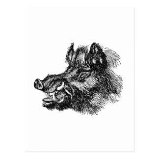 Vintage Vicious Wild Boar w Tusks Template Postcard