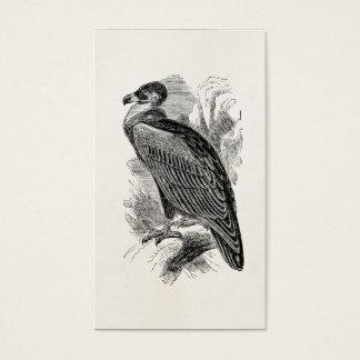 Vintage Vulture Bird Personalized Vultures Birds