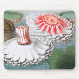 Vintage Waterlilies Flowers in a Garden Pond Mouse Pad