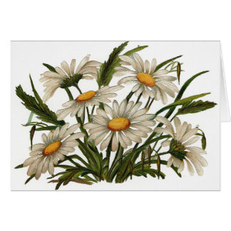 Vintage - White Daisies Greeting Card
