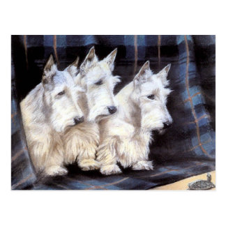 Vintage White Scottish Terriers Scotties Postcard