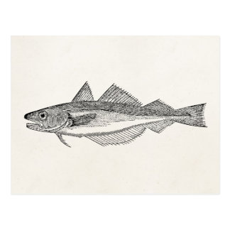 Vintage Whiting Fish - Aquatic Fishes Template Postcard