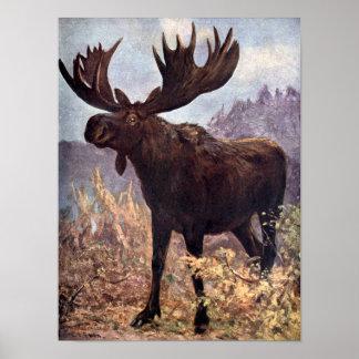 Vintage Wild Animal, Moose or Elk by CE Swan Poster