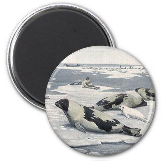 Vintage Wild Animals, Artic Harbor Seals Icerbergs Refrigerator Magnet