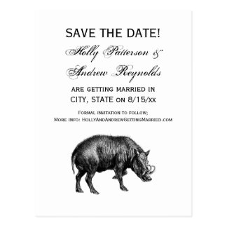 Vintage Wild Boar Drawing BW Postcard