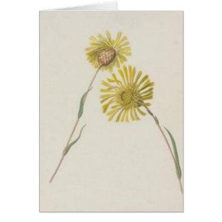 Vintage Wildflowers: Yellow Wildflowers Greeting Cards