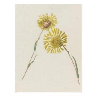 Vintage Wildflowers: Yellow Wildflowers Postcard