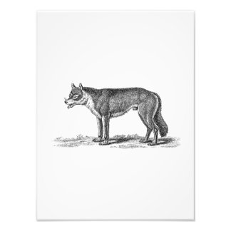Vintage Wolf Illustration -1800's Wolves Template Photo Print