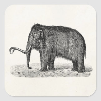 Vintage Woolly Mammoth Illustration Wooly Mammoths Square Sticker
