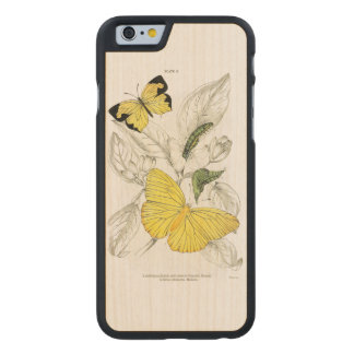 Vintage Yellow Butterflies Insects Carved® Maple iPhone 6 Case